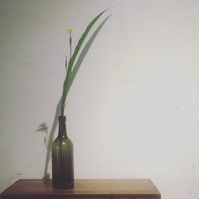 茶屋中的投入花