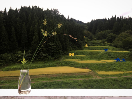 野の花 Wild flowers