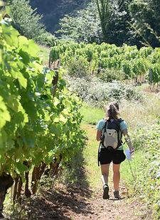 Jujurieux_randonée des vignes_léa-14-PNA