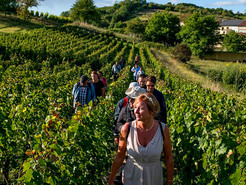 Rando-Bulles : a walk in the middle of the vineyards !