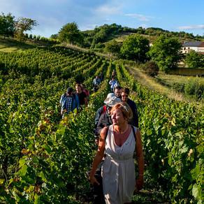 La Rando-Bulles : une balade au milieu des vignes !