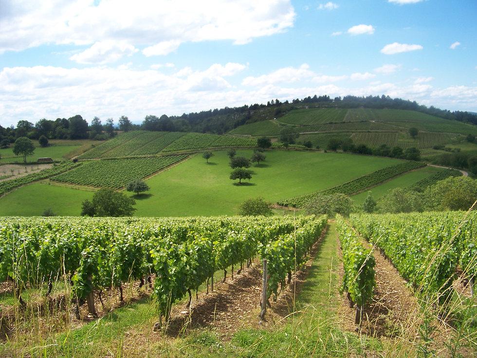 Vigne, Mérignat © BALTIK (2).JPG