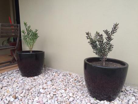 How to create a termite-smart garden