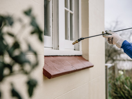 What should you do before, during and after a Pest Control Treatment?