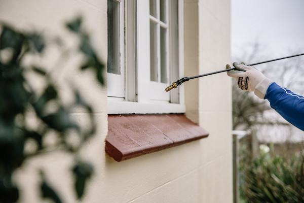 Pest treatment to window frame