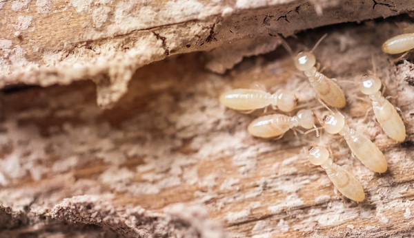 Termites v Borers – What's the difference?