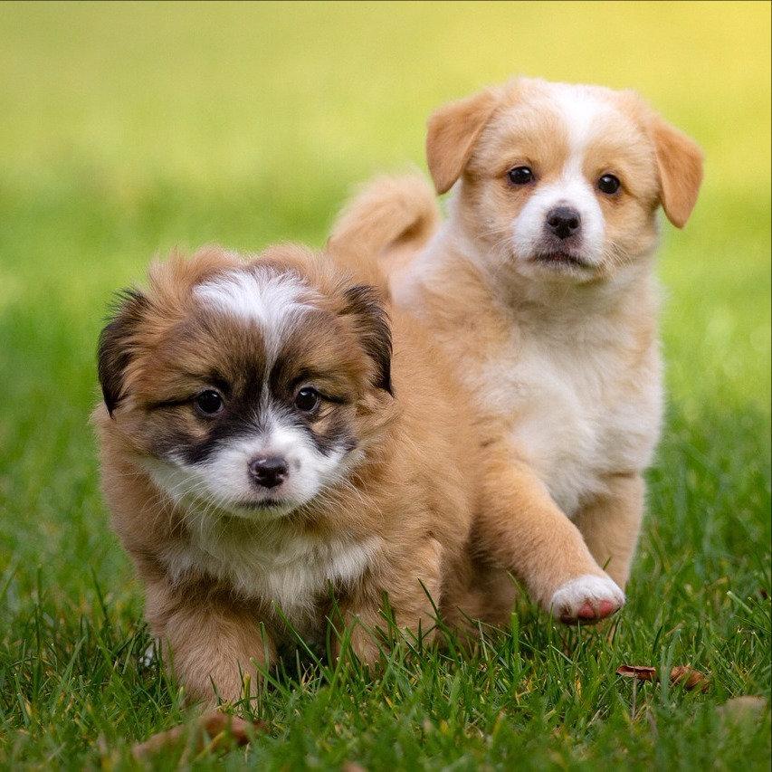 Puppy Life skills class