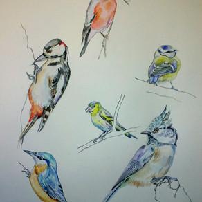 Конкурс-челлендж в честь Международного дня птиц