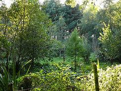 ForestGarden3.jpg