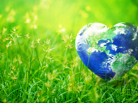 5 Ways You Can Contribute to Help Make the Earth Greener & Healthier | in 2021