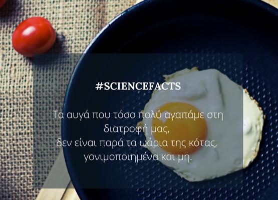 #eggs_fact