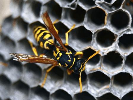 Τρομακτικές, αλλά χρήσιμες… Ας μιλήσουμε για τις σφήκες