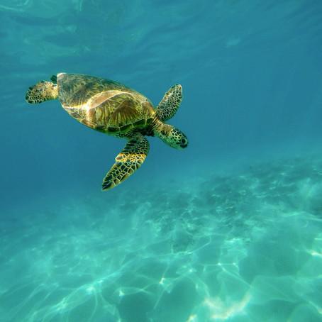 Θαλάσσιες Χελώνες: Turtally Awesome