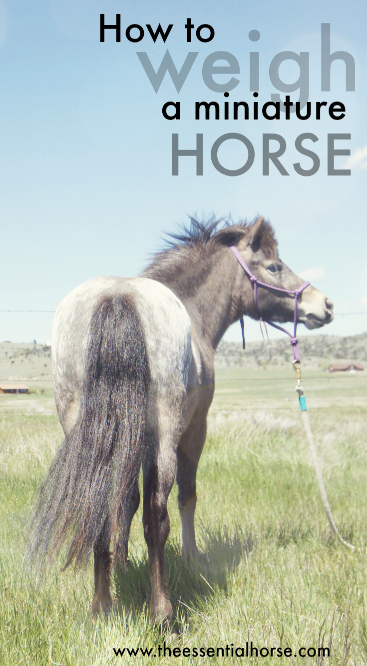 How to weight a miniature horse