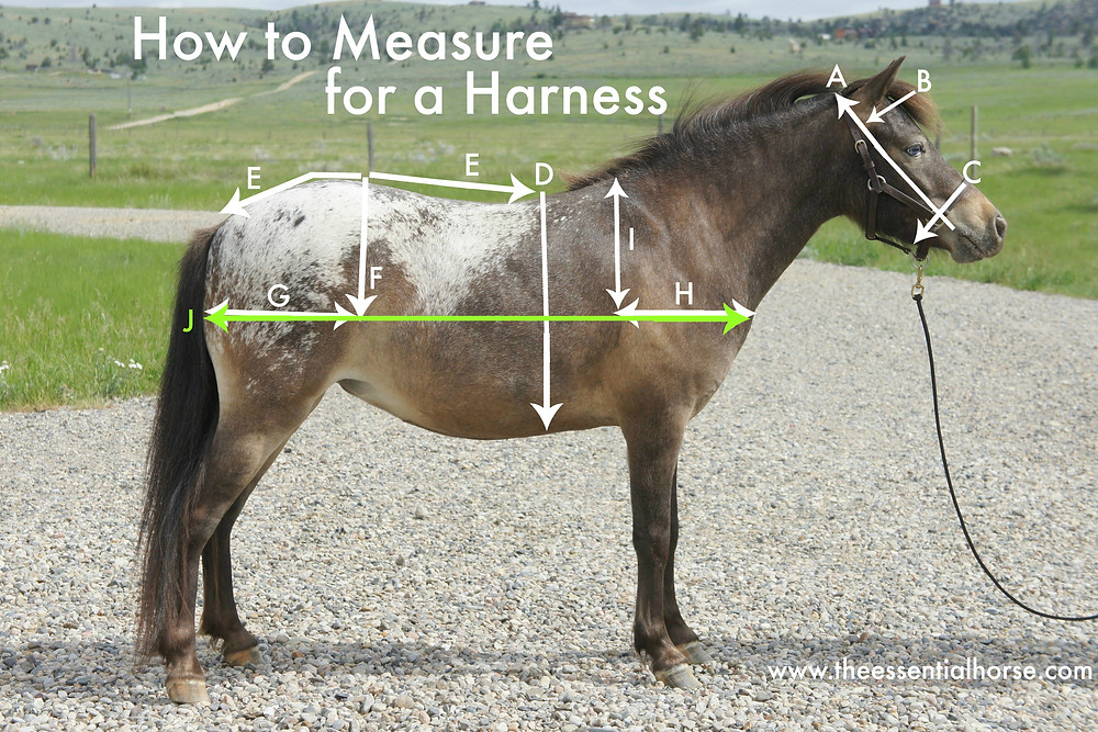 How to Measure for a Harness