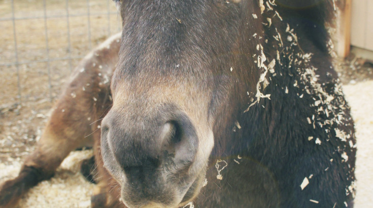 Natural Nutrition for Horses Clinic