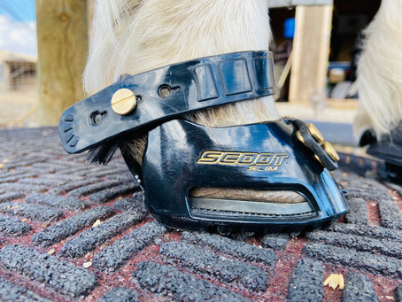 Scoot Boot Review