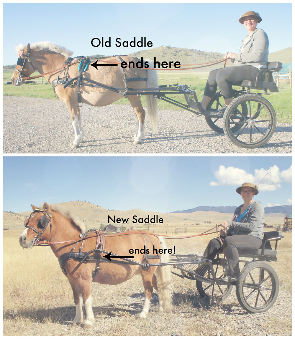 saddlecollage