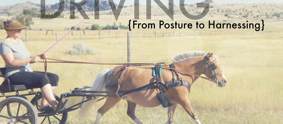 Proper Driving – From Posture to Harnessing