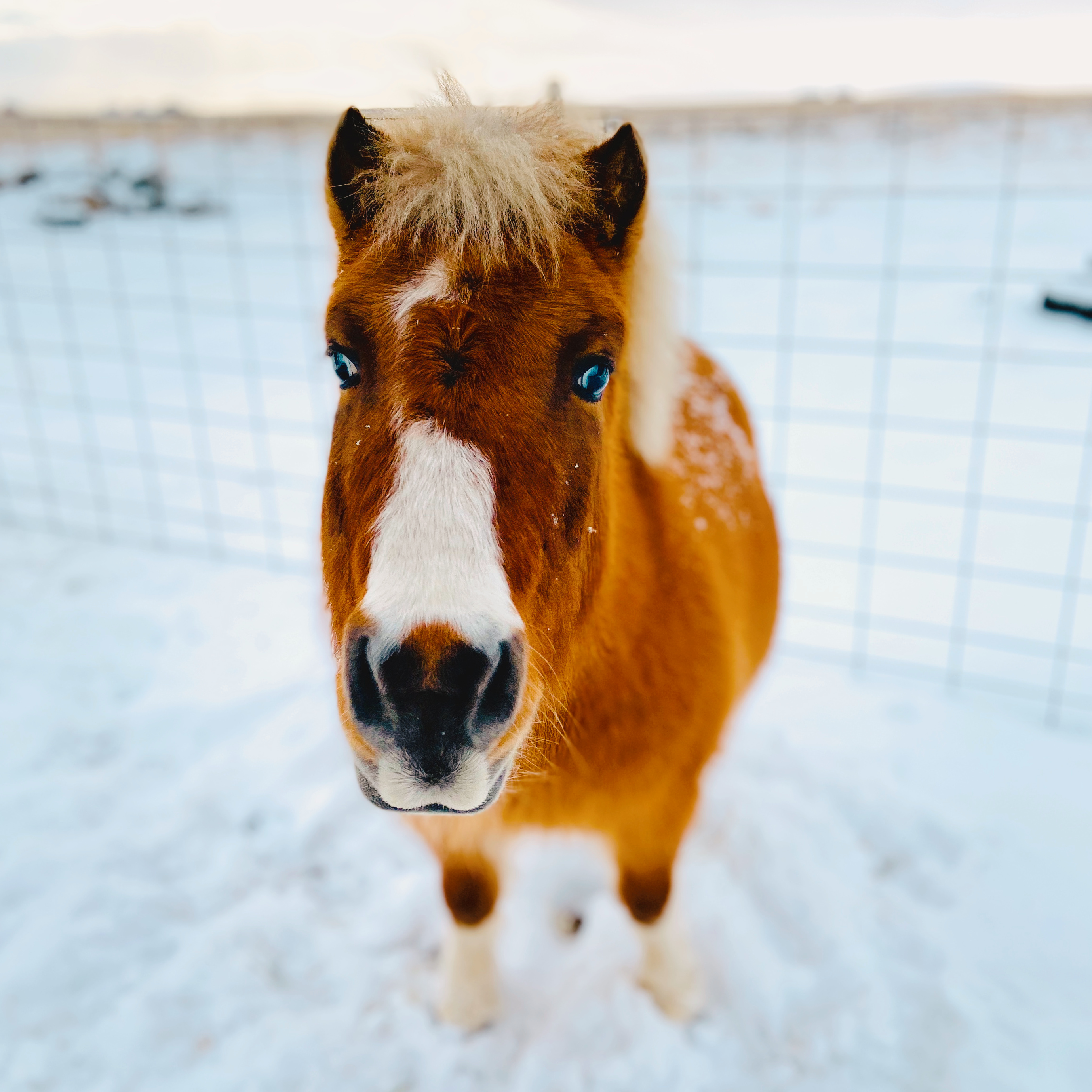 Winter Weather and Ponies