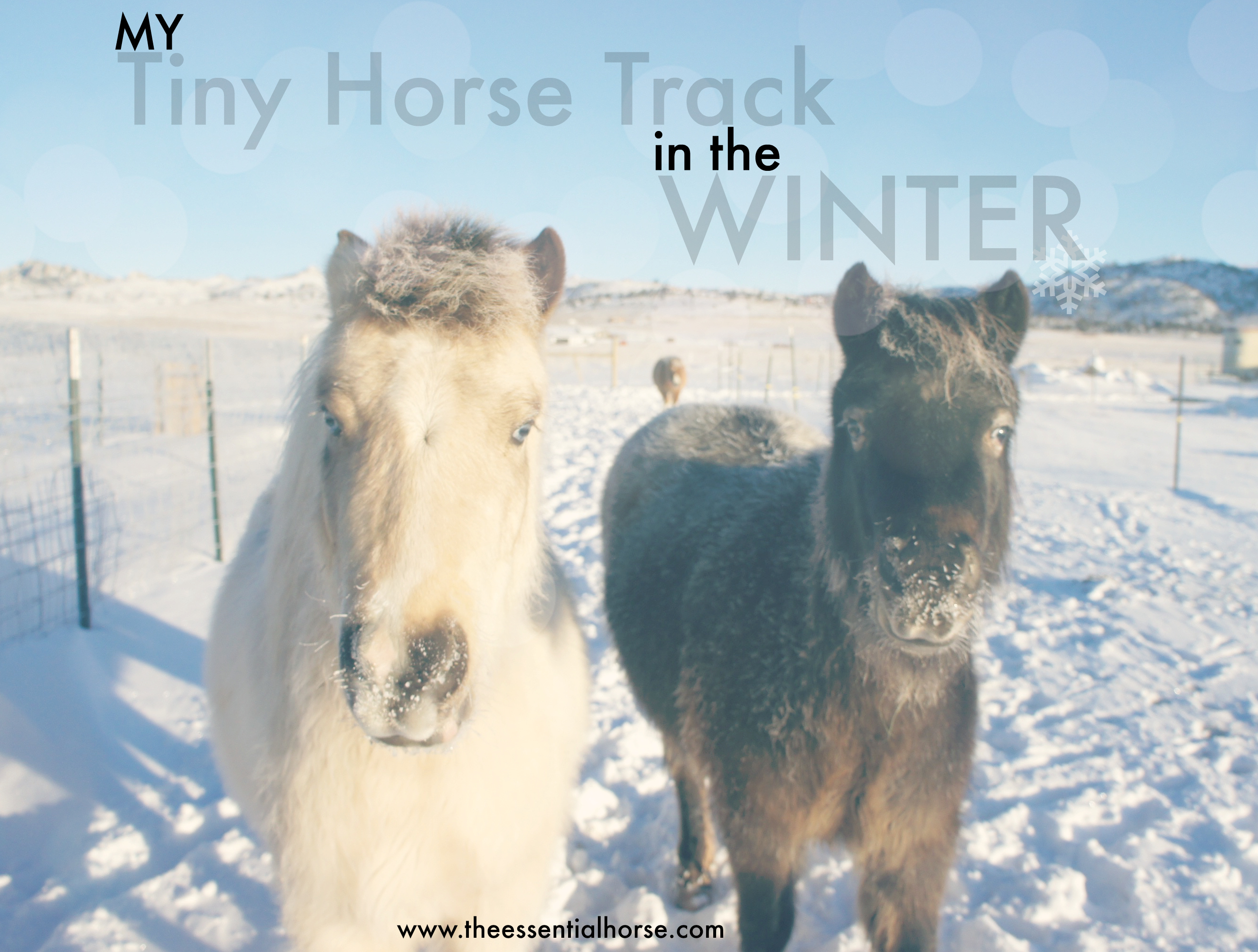 My Tiny Horse Track in the Winter