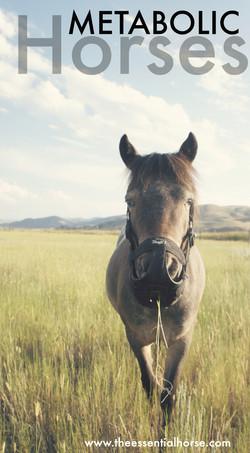 Metabolic Horses