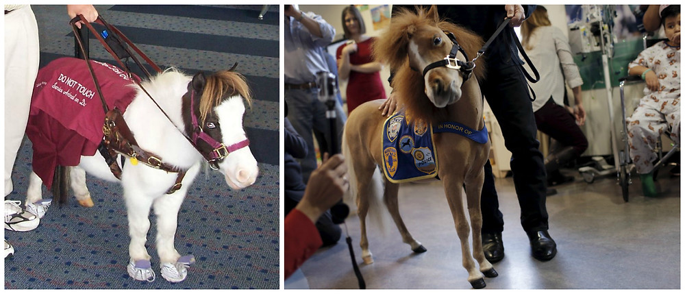 Therapy horses hard at work.