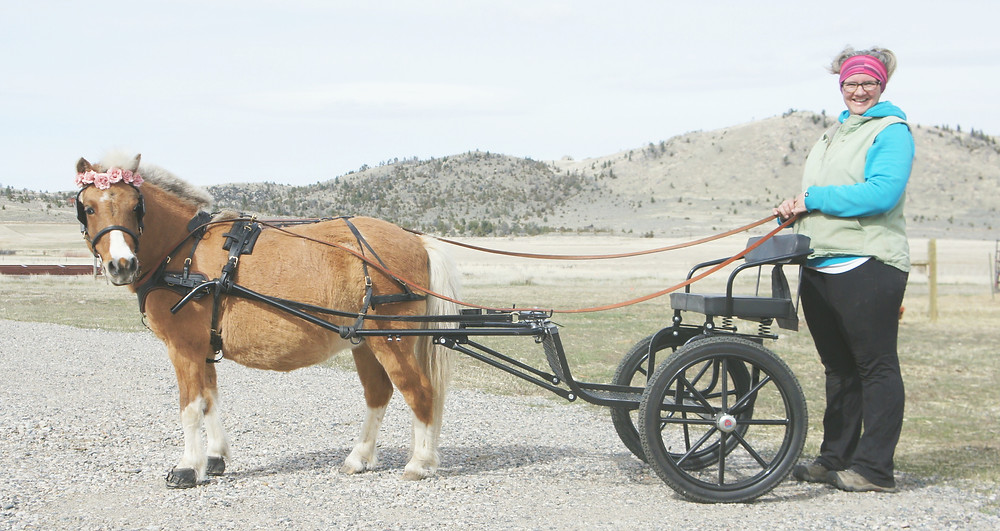 Sky and her Kingston Saddlery Easy Entry Cart - www.theessentialhorse.com