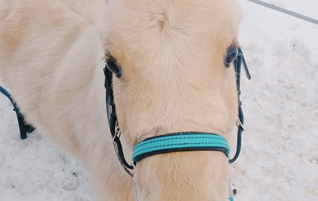How to Make Your Pony Crazy