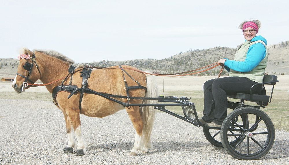 Sky in harness with her Kingston Saddlery Easy Entry cart - www.theessentialhorse.com