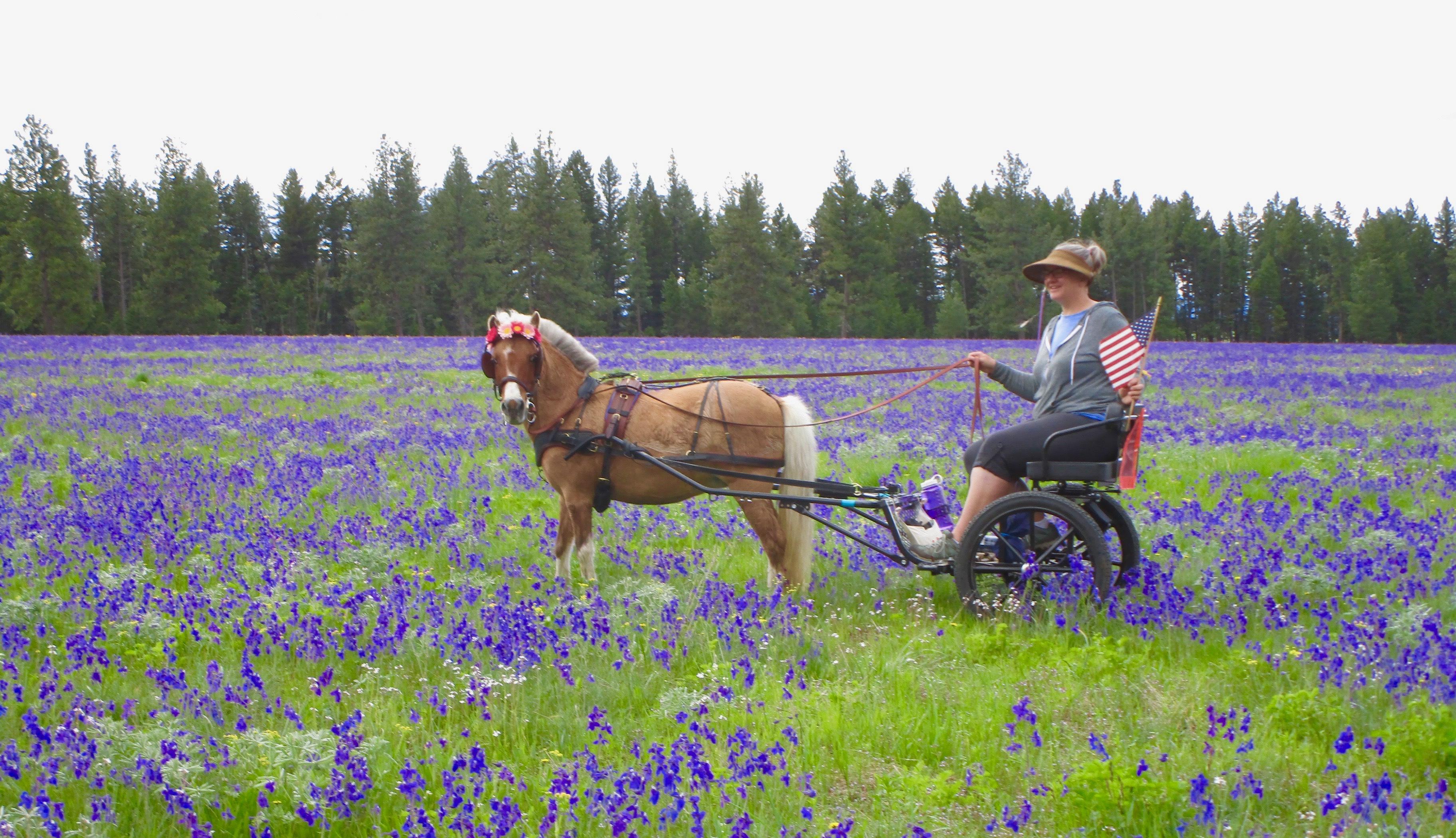 Kingston Saddlery Easy Entry Cart