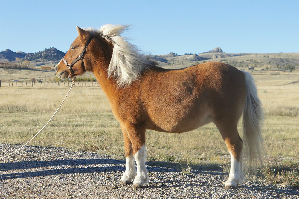 Nice side shot of sky. The wind was blowing her mane however so we had to change directions...