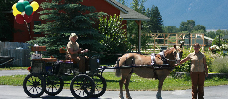 Thoughts on Purchasing a Driving Pony