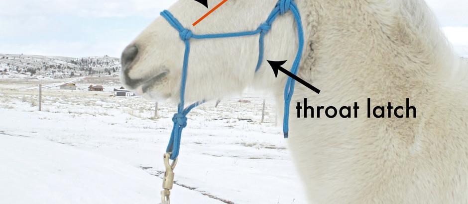 Miniature Horse Halters Part 2