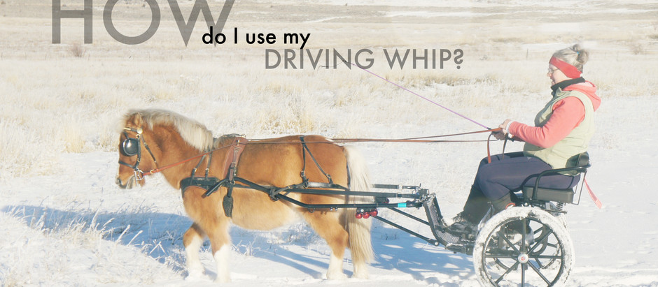 How do I use my driving whip?