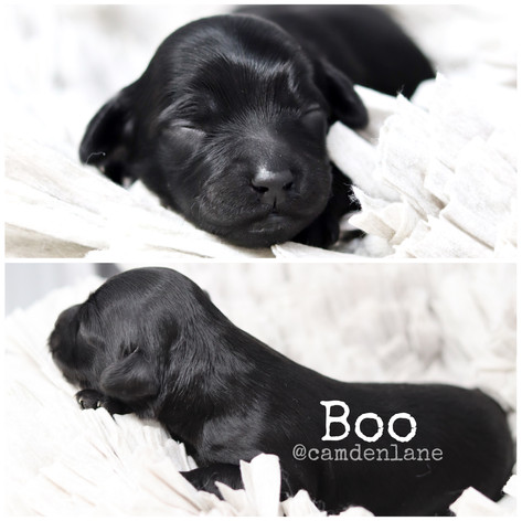 rosie/obi boo