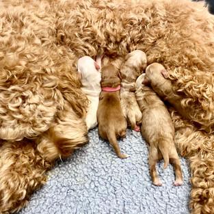 Paisley's puppies