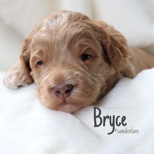 Paisley/Cooper Bryce