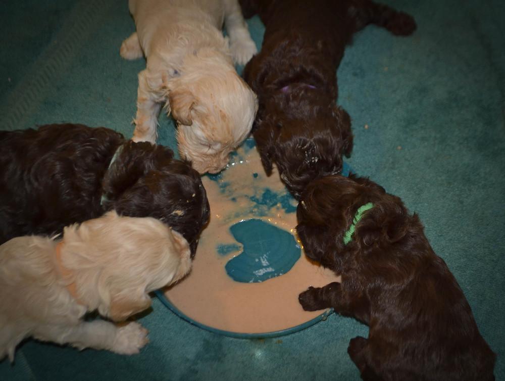 Winnie puppies eating (2 of 3).jpg