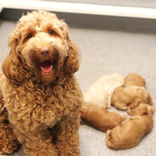 Paisley and pups