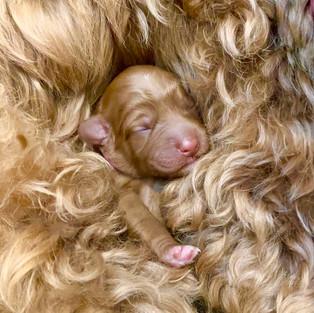 Mama and pup