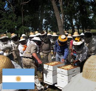 Capacitación en diagnóstico y control de enfermedades de las abejas