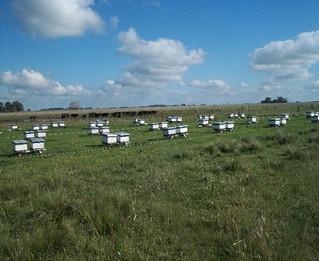 Preparación de colmenas para la invernada y salida del invierno