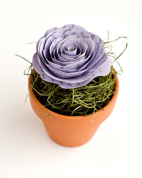 Rose in Terra Cotta Flower Pot with Customization