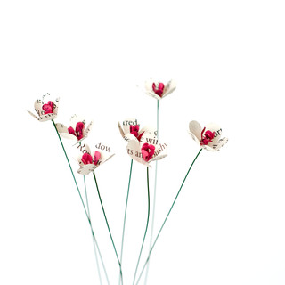 hawthorne blossoms