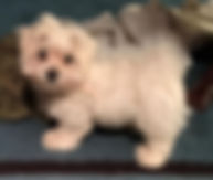 dot puppy.jpg