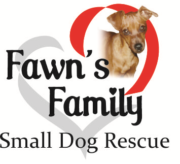 Fawn's Small Dog Rescue | Adopt | Jacksonville