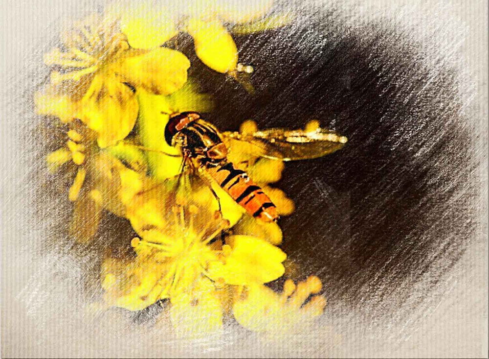 Agrimony, Bach Flower Remedy for People who hide their emotions, anxiety