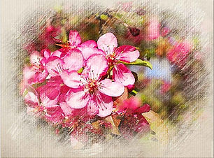 Crab-apple-outer.jpg