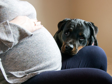 Do your pets know when you are pregnant?